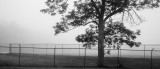 Blue Hill Fairgrounds Fence and Tree