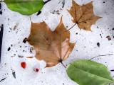 Leaves on Snow #3
