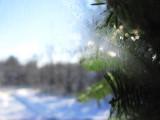 Window Frost, Wreath, Driveway