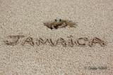 Jamiacan Sand Crab 02