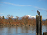 Snohomish River with Cascade Mts. in the distance.