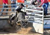 8_seconds_bull_riding_rangiora