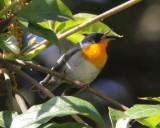 2011 Costa Rica