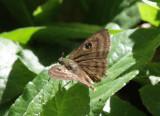 IMG_6245_butterfly.jpg