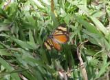 IMG_6726_butterfly.jpg