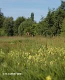 Bourgoyen June 2011