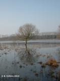 Bourgoyen March 2012