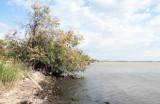 Camargue shoreline I