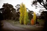 Newbridge Trees