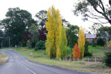 Colourful Newbridge