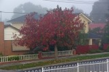 Foggy and Red