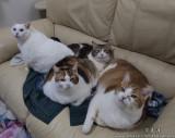 §Úªº¿ß¥D¤H ªi¥J ªü©f ªü¥Õ¤Îªü¯Z (my cats-ball, mui, pa and ban)