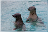 Parc Zoologique Fort-Mardyck Dunkerque Grand Littoral - Fr