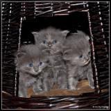 Kittens 24 days old - Framed