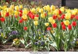 030  Philadelphia Flowers.JPG