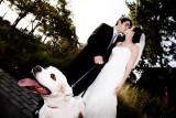 Kristen & Tamir Wedding Highlights
