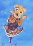 Teddy on glass.jpg