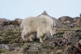 Colorado summer 2011 scenery, mammals etc.