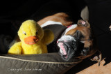 Me and my ducky
