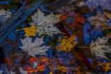 Damp-Colorful-Carpet.jpg