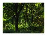 Deep forest ?