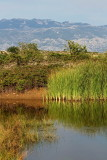 Pond kal_MG_1781-11.jpg
