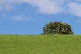 Tree drevo_MG_9017-11.jpg