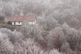 Frost slana_MG_1690-11.jpg