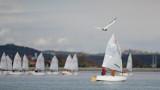 Gull and boats galeb in èolni_MG_8005-111.jpg