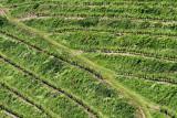Vineyard in Haloze vinograd v Halozah_MG_989011-111.jpg