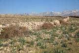 Pasture and stone fence pa¹nik in kamnita ograja_MG_0059-11.jpg