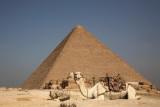 Pyramid of Khufu, great pyramid, pyramid of Cheops and dromedary keopsova piramida in dromedar_MG_9954-1.jpg