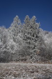 Forest in winter gozd pozimi_MG_0956-1.jpg