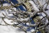 Moss and snow_MG_1074-1.jpg