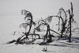 Tracks and branches on ice sledi in veje na ledu_MG_1086-1.jpg