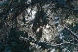 Spruce branch and snow  zasne¾ena smrekova veja_MG_1104-1.jpg