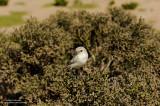 An Unknown Bird
