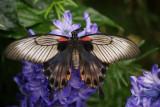 Montreal Botanical Gardens - Butterflies
