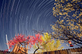 Backyard Startrails
