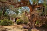 Tree-house and dormitory, Ol Jogi