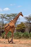 Graceful giant!