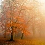 Autumn mist (2288)