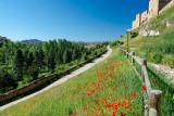Path and poppies, Sigüenza