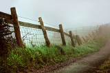 Fence in the fog, Eggardon Hill