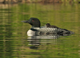 loon_examples