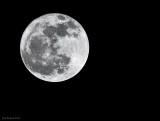 _N122589 Worm Moon.jpg