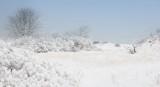 _N123069 Plum Island Di=unes with Fresh Snow.jpg