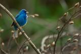 New England Birding