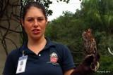 Screech Owl and handler