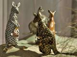 Kangaroos and babies